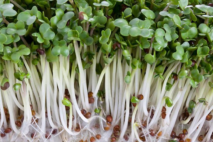 Snoozzz_Organics_Sprouts_Blog