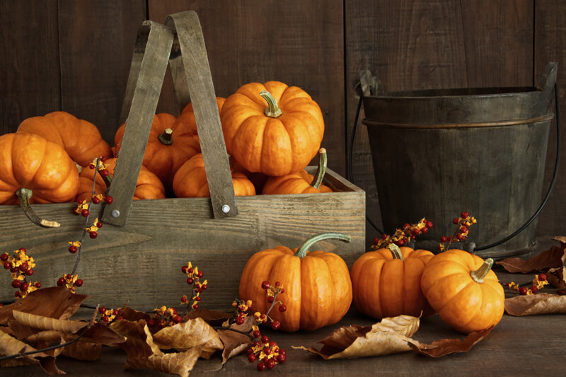 Pumpkins are in season