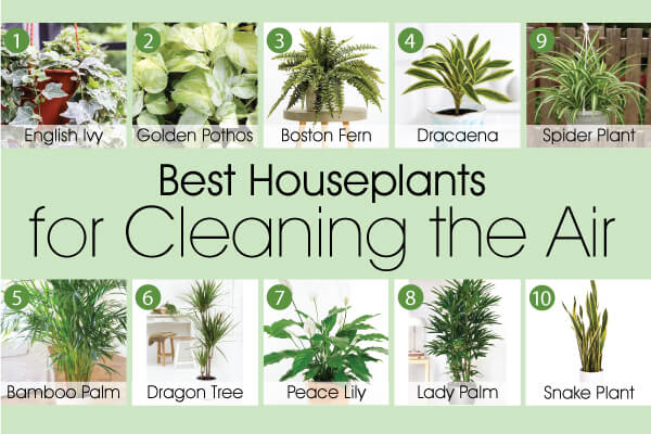 Best plants for cleaning the air
